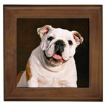 Bulldog Gifts, Dog Merchandise, Custom Dog Gift Ideas, Breed Information & Dog Photos