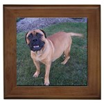 Bullmastiff Gifts, Dog Merchandise, Custom Dog Gift Ideas, Breed Information & Dog Photos