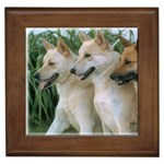Canaan Gifts, Dog Merchandise, Custom Dog Gift Ideas, Breed Information & Dog Photos