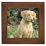 Chesapeake Bay Retriever Gifts, Dog Merchandise, Custom Dog Gift Ideas, Breed Information & Dog Photos
