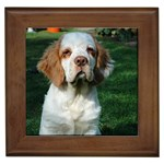 Clumber Spaniel Gifts, Dog Merchandise, Custom Dog Gift Ideas, Breed Information & Dog Photos
