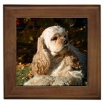 Cocker Spaniel Gifts, Dog Merchandise, Custom Dog Gift Ideas, Breed Information & Dog Photos