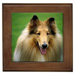 Collie Gifts, Dog Merchandise, Custom Dog Gift Ideas, Breed Information & Dog Photos