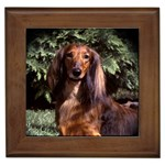 Dachshund Gifts, Dog Merchandise, Custom Dog Gift Ideas, Breed Information & Dog Photos