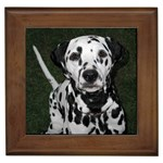 Dalmatian Gifts, Dog Merchandise, Custom Dog Gift Ideas, Breed Information & Dog Photos