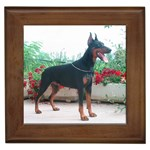 Doberman Pinscher Gifts, Dog Merchandise, Custom Dog Gift Ideas, Breed Information & Dog Photos