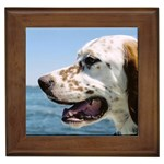English Setter Gifts, Dog Merchandise, Custom Dog Gift Ideas, Breed Information & Dog Photos