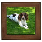 English Springer Spaniel Gifts, Dog Merchandise, Custom Dog Gift Ideas, Breed Information & Dog Photos