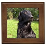 Flat Coated Retriever Gifts, Dog Merchandise, Custom Dog Gift Ideas, Breed Information & Dog Photos