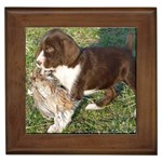 German Wirehaired Pointer Gifts, Dog Merchandise, Custom Dog Gift Ideas, Breed Information & Dog Photos