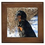 Gordon Setter Gifts, Dog Merchandise, Custom Dog Gift Ideas, Breed Information & Dog Photos