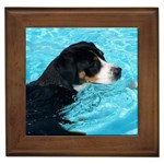 Greater Swiss Mountain Dog Gifts, Dog Merchandise, Custom Dog Gift Ideas, Breed Information & Dog Photos