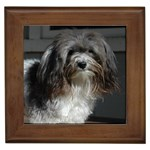 Havanese Gifts, Dog Merchandise, Custom Dog Gift Ideas, Breed Information & Dog Photos