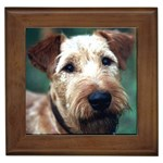 Irish Terrier Gifts, Dog Merchandise, Custom Dog Gift Ideas, Breed Information & Dog Photos