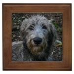 Irish Wolfhound Gifts, Dog Merchandise, Custom Dog Gift Ideas, Breed Information & Dog Photos