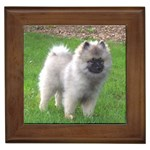 Keeshond Gifts, Dog Merchandise, Custom Dog Gift Ideas, Breed Information & Dog Photos