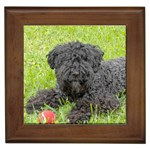 Kerry Blue Terrier Gifts, Dog Merchandise, Custom Dog Gift Ideas, Breed Information & Dog Photos