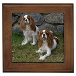 King Charles Spaniel Gifts, Dog Merchandise, Custom Dog Gift Ideas, Breed Information & Dog Photos
