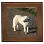 Kuvasz Gifts, Dog Merchandise, Custom Dog Gift Ideas, Breed Information & Dog Photos