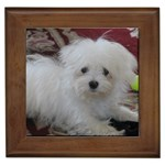 Maltese Gifts, Dog Merchandise, Custom Dog Gift Ideas, Breed Information & Dog Photos