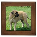 Mastiff Gifts, Dog Merchandise, Custom Dog Gift Ideas, Breed Information & Dog Photos