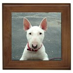 Miniature Bull Terrier Gifts, Dog Merchandise, Custom Dog Gift Ideas, Breed Information & Dog Photos