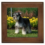 Miniature Schnauzer Gifts, Dog Merchandise, Custom Dog Gift Ideas, Breed Information & Dog Photos