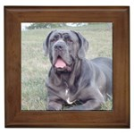Neapolitan Mastiff Gifts, Dog Merchandise, Custom Dog Gift Ideas, Breed Information & Dog Photos