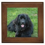 Newfoundland Gifts, Dog Merchandise, Custom Dog Gift Ideas, Breed Information & Dog Photos
