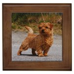 Norfolk Terrier Gifts, Dog Merchandise, Custom Dog Gift Ideas, Breed Information & Dog Photos