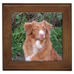 Nova Scotia Duck Tolling Retriever Gifts, Dog Merchandise, Custom Dog Gift Ideas, Breed Information & Dog Photos