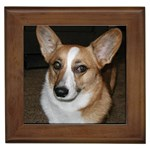 Pembroke Welsh Corgi Gifts, Dog Merchandise, Custom Dog Gifts Ideas, Breed Information & Dog Photos