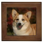 Pembroke Welsh Corgi Gifts, Dog Merchandise, Custom Dog Gift Ideas, Breed Information & Dog Photos
