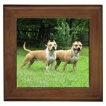 Pitbull Terrier Gifts, Dog Merchandise, Custom Dog Gift Ideas, Breed Information & Dog Photos