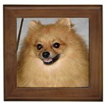 Pomeranian Gifts, Dog Merchandise, Custom Dog Gift Ideas, Breed Information & Dog Photos
