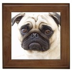 Pug Gifts, Dog Merchandise, Custom Dog Gift Ideas, Breed Information & Dog Photos