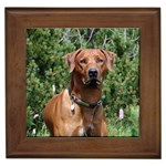 Rhodesian Ridgeback Gifts, Dog Merchandise, Custom Dog Gift Ideas, Breed Information & Dog Photos