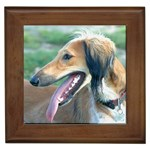 Saluki Gifts, Dog Merchandise, Custom Dog Gift Ideas, Breed Information & Dog Photos