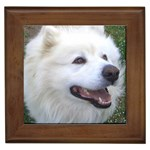 Samoyed Gifts, Dog Merchandise, Custom Dog Gift Ideas, Breed Information & Dog Photos
