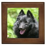 Schipperke Gifts, Dog Merchandise, Custom Dog Gift Ideas, Breed Information & Dog Photos
