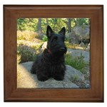 Scottish Terrier Gifts, Dog Merchandise, Custom Dog Gift Ideas, Breed Information & Dog Photos