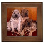 Shar Pei Gifts, Dog Merchandise, Custom Dog Gift Ideas, Breed Information & Dog Photos