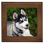 Siberian Husky Gifts, Dog Merchandise, Custom Dog Gift Ideas, Breed Information & Dog Photos