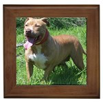 Staffordshire Bull Terrier Gifts, Dog Merchandise, Custom Dog Gifts Ideas, Breed Information & Dog Photos