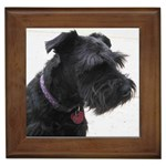 Standard Schnauzer Gifts, Dog Merchandise, Custom Dog Gifts Ideas, Breed Information & Dog Photos
