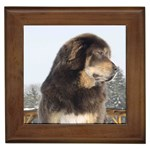 Tibetan Mastiff Gifts, Dog Merchandise, Custom Dog Gifts Ideas, Breed Information & Dog Photos