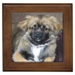 Tibetan Spaniel Gifts, Dog Merchandise, Custom Dog Gifts Ideas, Breed Information & Dog Photos