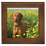 Vizsla Gifts, Dog Merchandise, Custom Dog Gifts Ideas, Breed Information & Dog Photos