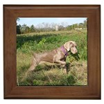 Weimaraner Gifts, Dog Merchandise, Custom Dog Gifts Ideas, Breed Information & Dog Photos