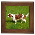 Welsh Springer Spaniel Gifts, Dog Merchandise, Custom Dog Gifts Ideas, Breed Information & Dog Photos